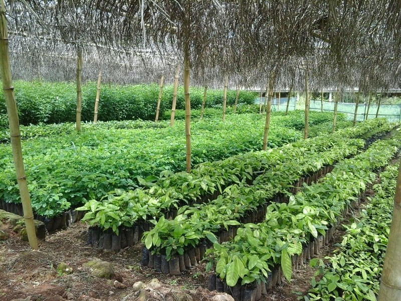 Tree Nursery in Devego Village in the Volta Region